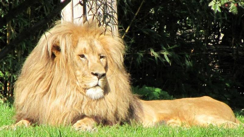 Ebenso hat sich Leipzig durch seinen artenreichen Zoo ...